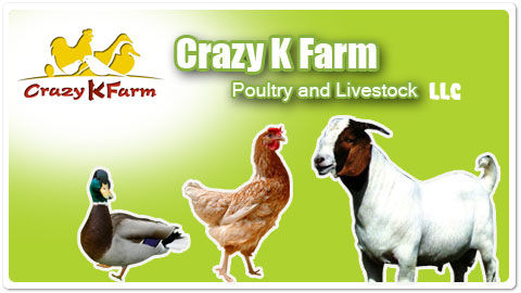 Crazy K Farm Poul